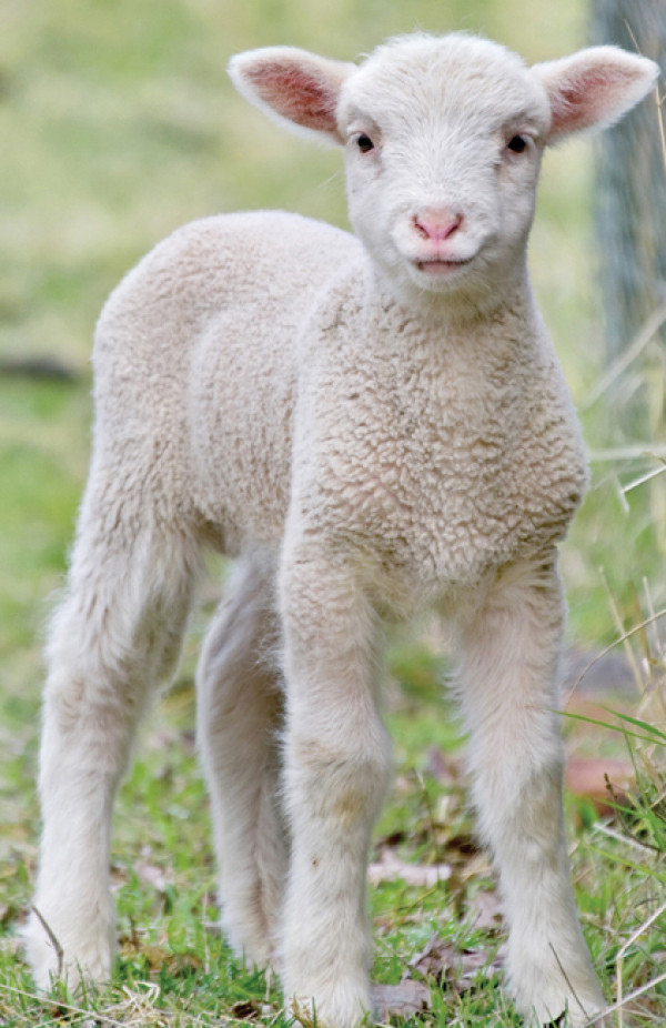 Iloiset varpaat -lampaanvilla 100 g