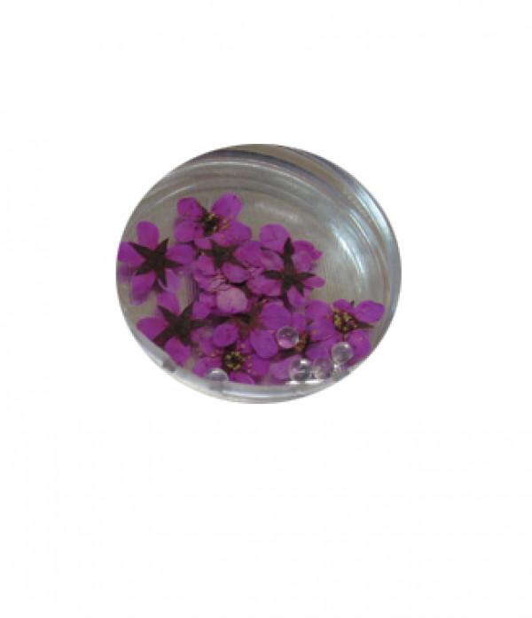 Kynsikoriste, kuivattu kukka pinkki