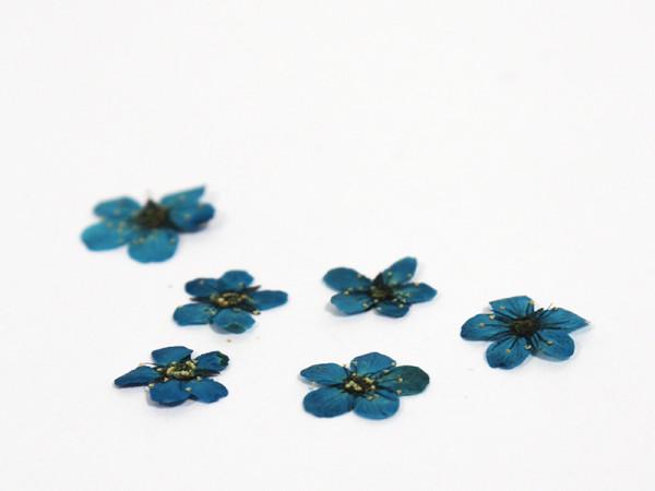 Kynsikoriste, kuivattu kukka turkoosi