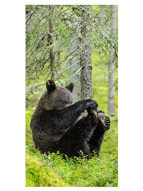 LaMente Lahjakortti Joogaava karhu 10kpl sis ku